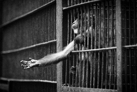 zoos animals prisons (wildlife/zoos) are zoos good or bad for animals zoos help with wildlife conservation and endangered species protection, but wild animals have trouble adapting.