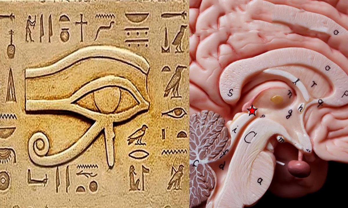 The Pineal Gland One Of The Biggest Secrets Kept From Humanity