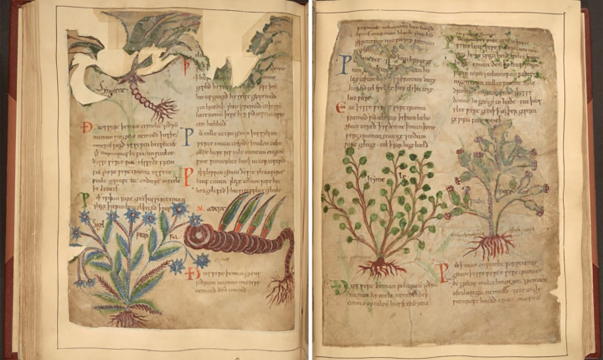 The Oldest Illustrated Book of Shadows on Herbal Remedies is Now Available For Free!