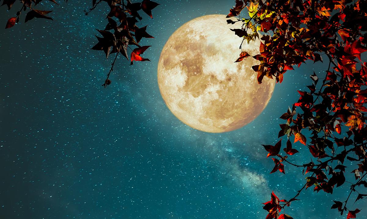 Full Moon Astrology: November 2017 Full Moon Will Usher in Feelings Of Overwhelming Love and Abundance