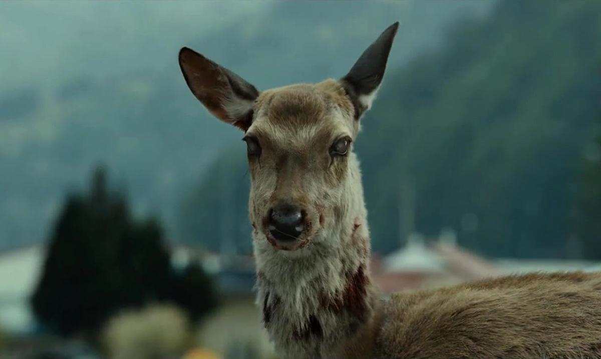 zombie deer ile ilgili görsel sonucu