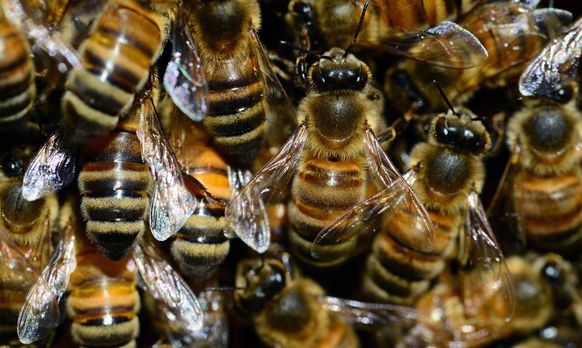 How Saving the Bees Is Necessary For Our Survival As a Species