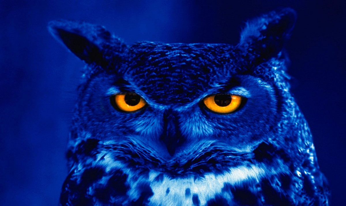 New Research Concludes that 'Night Owls' Are Highly Intelligent People