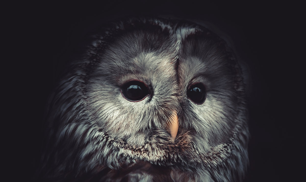 Study Reveals that Night Owls Are More Intelligent Than Early Birds