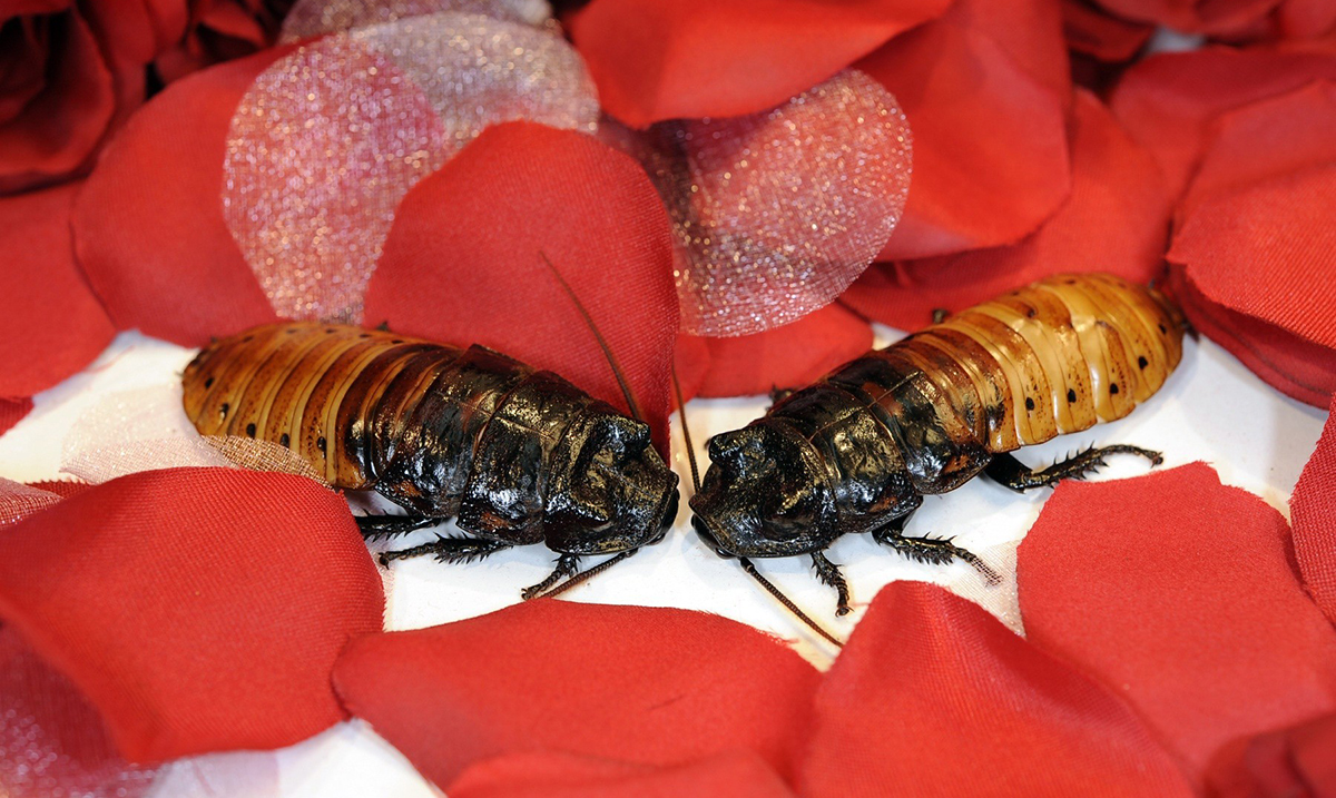 Celebrate Valentine's Day Right By Officially Naming a Cockroach After Your Ex