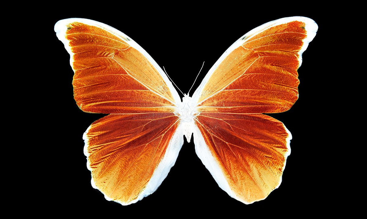 The Spiritual Significance Of The Butterfly: Do You See Them Often?