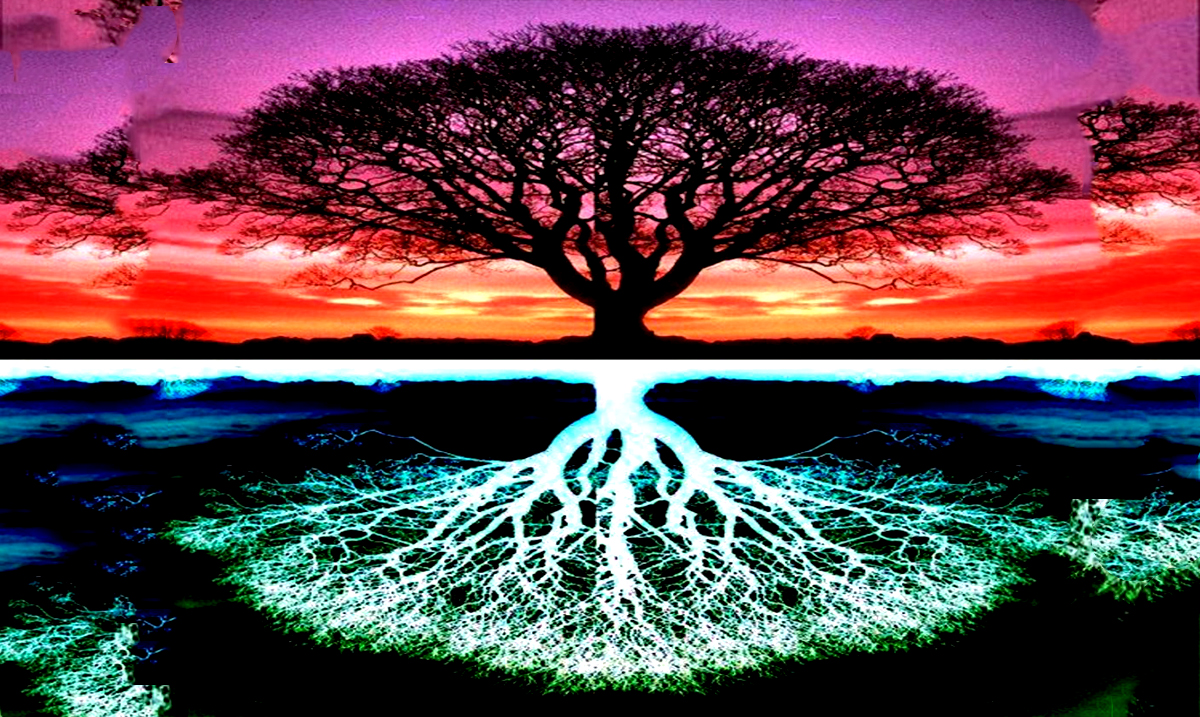 According To Your Birthday, This Is What Tree Your Soul Is From