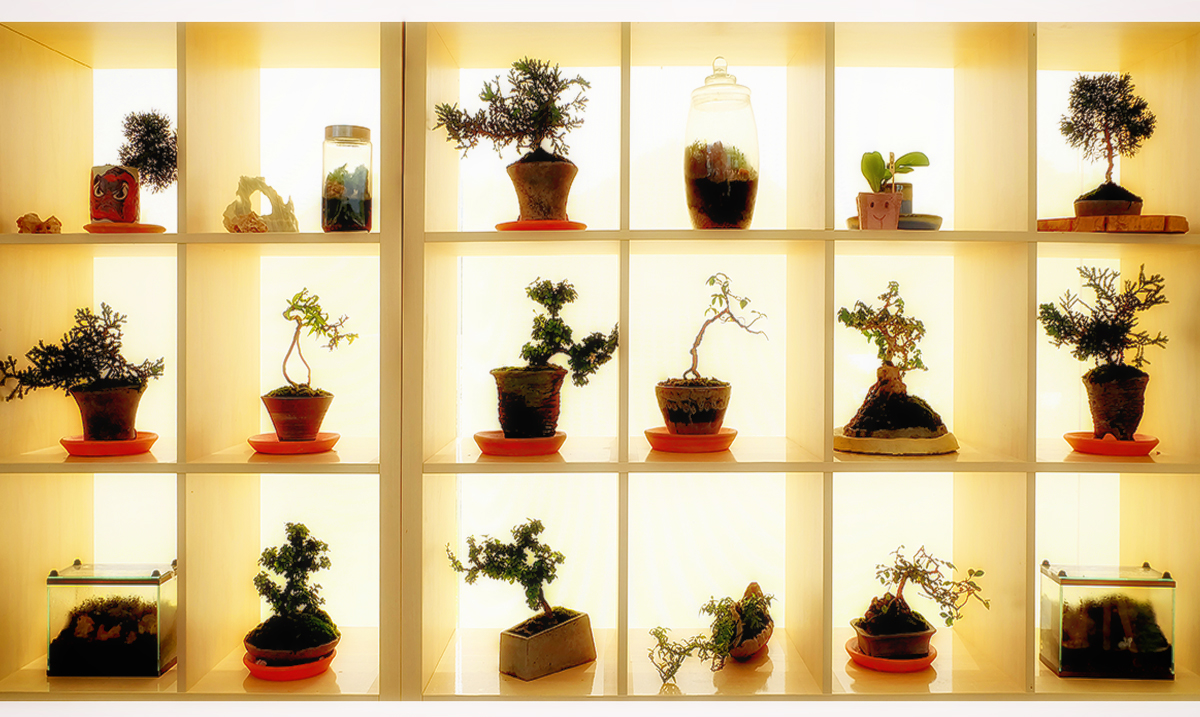 10 Common Plants That Bring Protection, Good Fortune, and Enhance Positive Spiritual Energy In Your Home