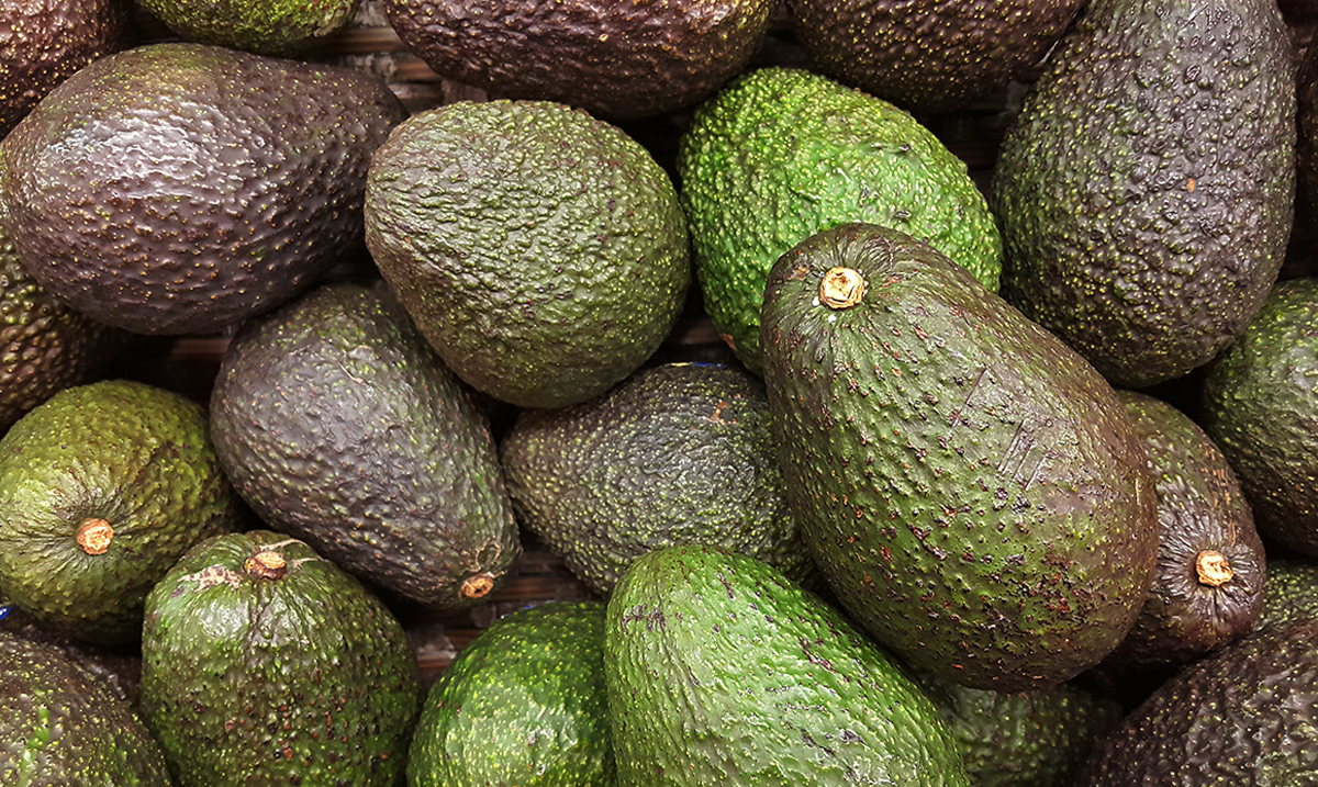 Researchers Are Now Offering People $300 to Eat Avocados Every Day
