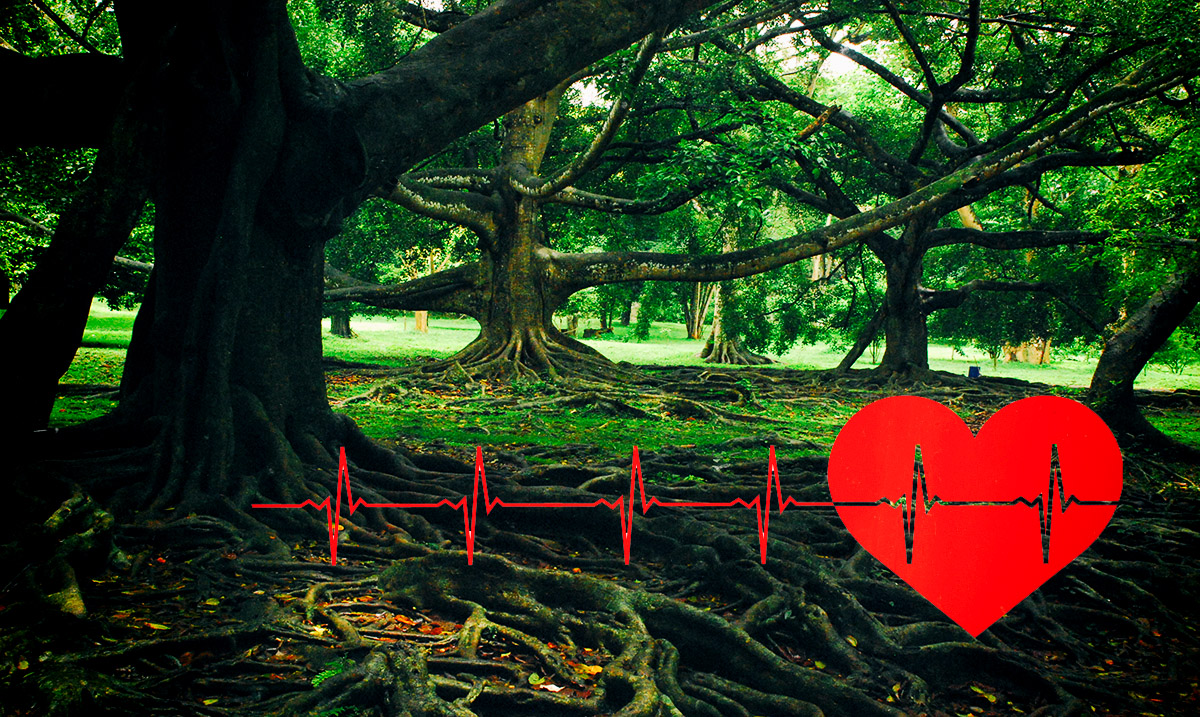 Science Suggests That Trees Have Their Own 'Heartbeats'