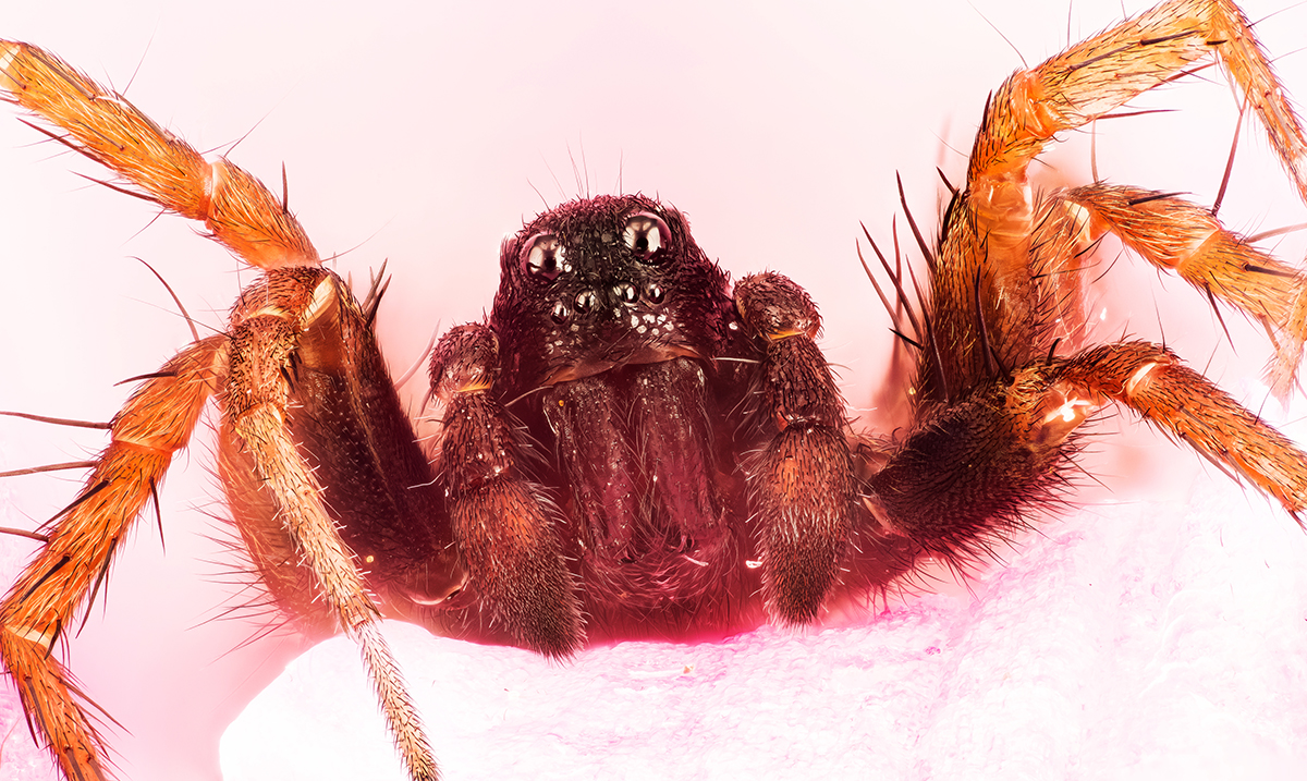 Researchers Explain Why You Should Never Kill A Spider In Your Home