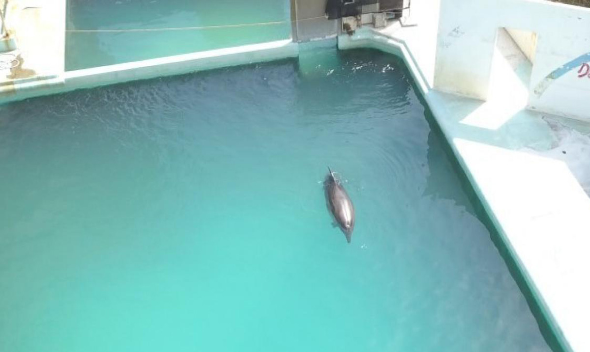 Honey the Dolphin Abandoned, After Japanese Marine Park Closed Down