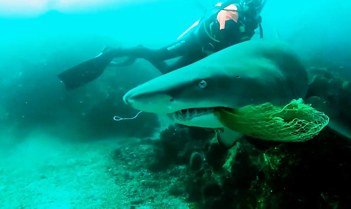Fearless Scuba Instructor Saves Shark's Life