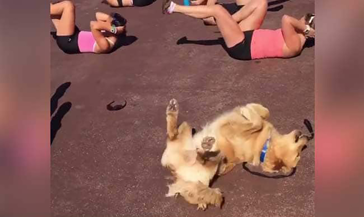 This Dog Is Literally All Of Us Trying To Get Our Beach Bodies