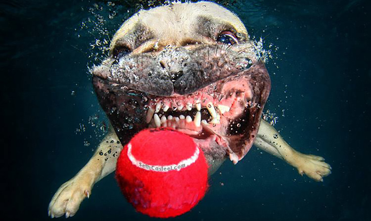Photographer Captures Heart Warming Underwater Photos of Dogs That Will Bring A Smile To Your Face