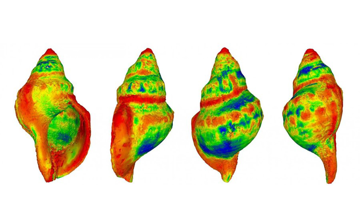 Study Finds that Sea Snails Will Dissolve Within Our Oceans, As They Become More Acidic