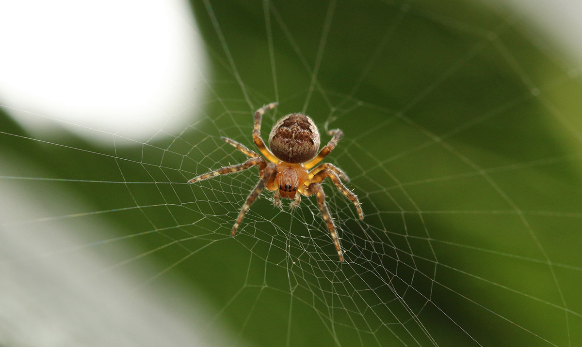 How to Keep Your Home Spider Free During the Upcoming Season