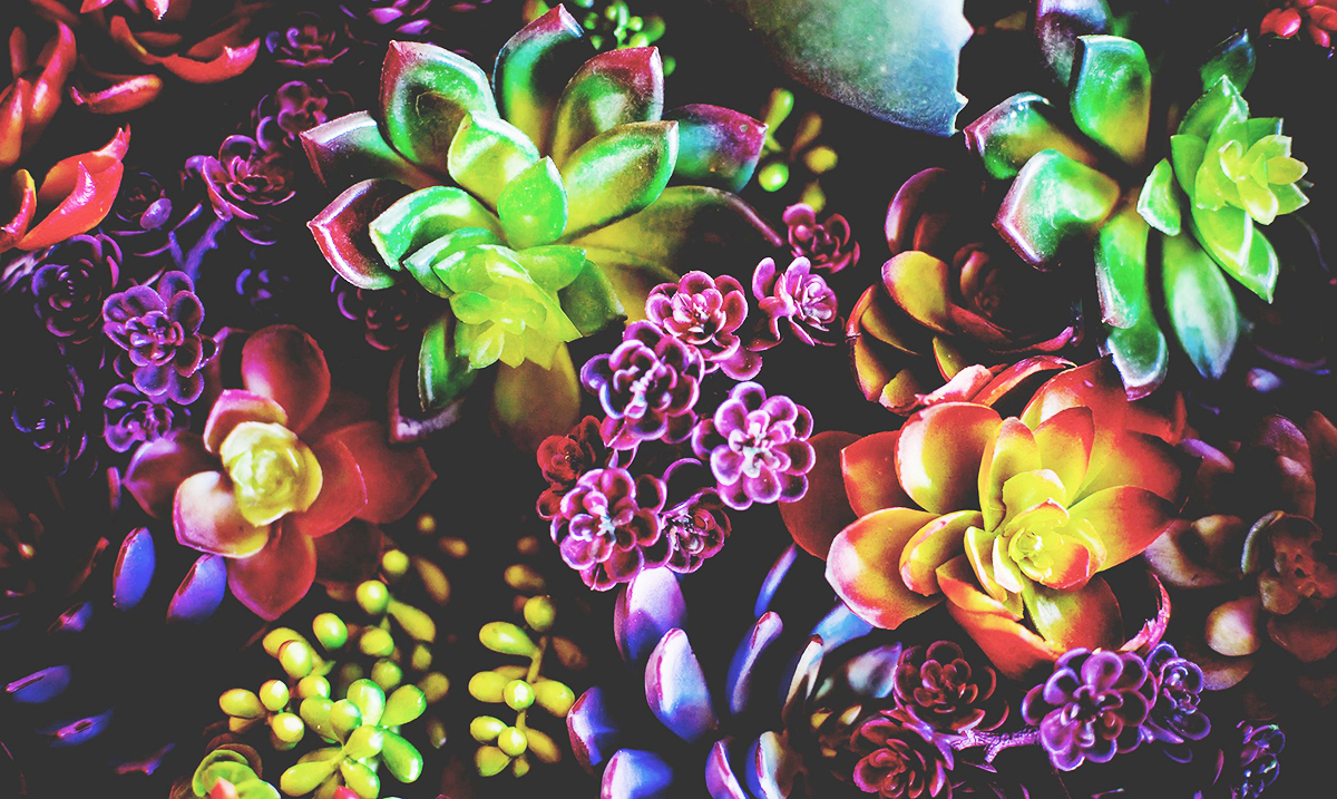 11 Plants That Will Promote Positivity and Bring Forth Good Fortune