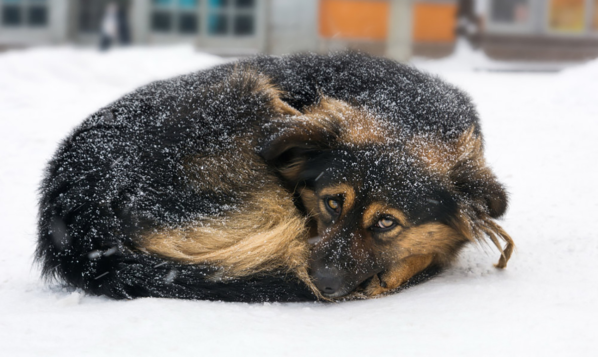 Recently Passed Legislation Makes It Illegal to Leave a Dog Outside in Cold Weather