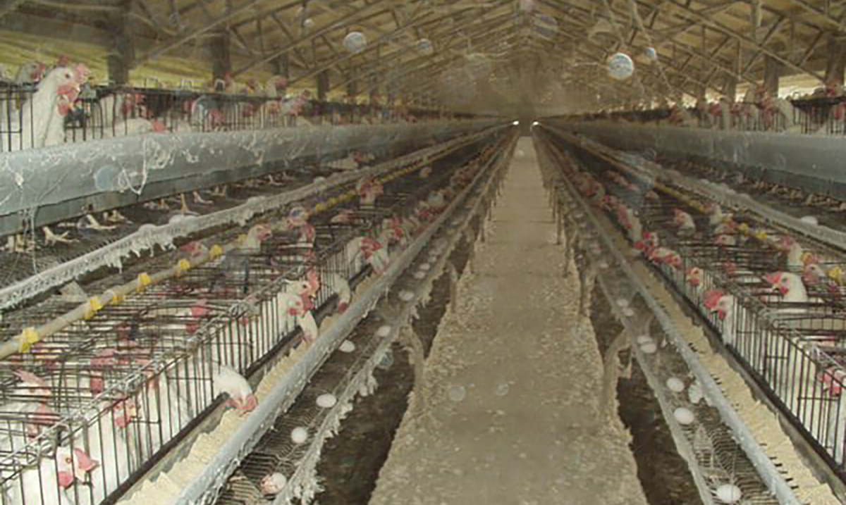 20+ Images the Egg Industry Would Do Anything to Keep You From Seeing