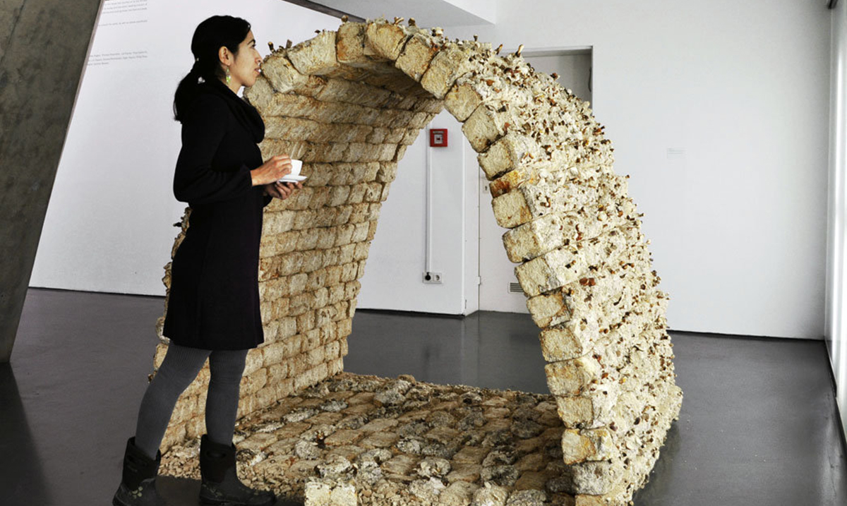 Mycologist Creates Bricks Made of Fungi That Are Stronger Than Concrete
