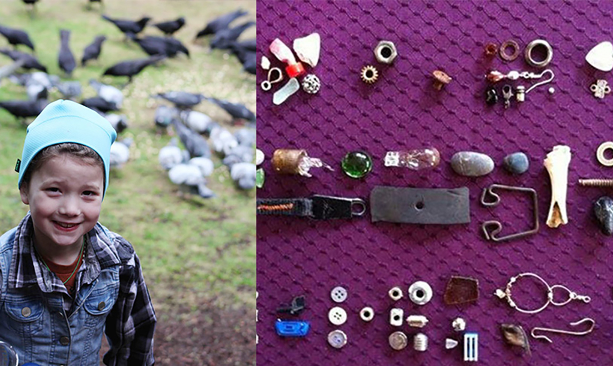 8-Year-Old Girl Receives Gifts From Crows She Fed For Years