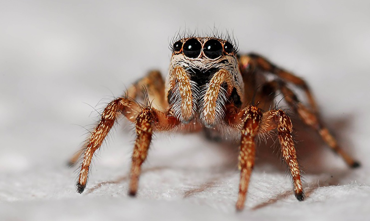 Theoretically If Spiders Were To Work Together They Could Eat Us All Within A Year