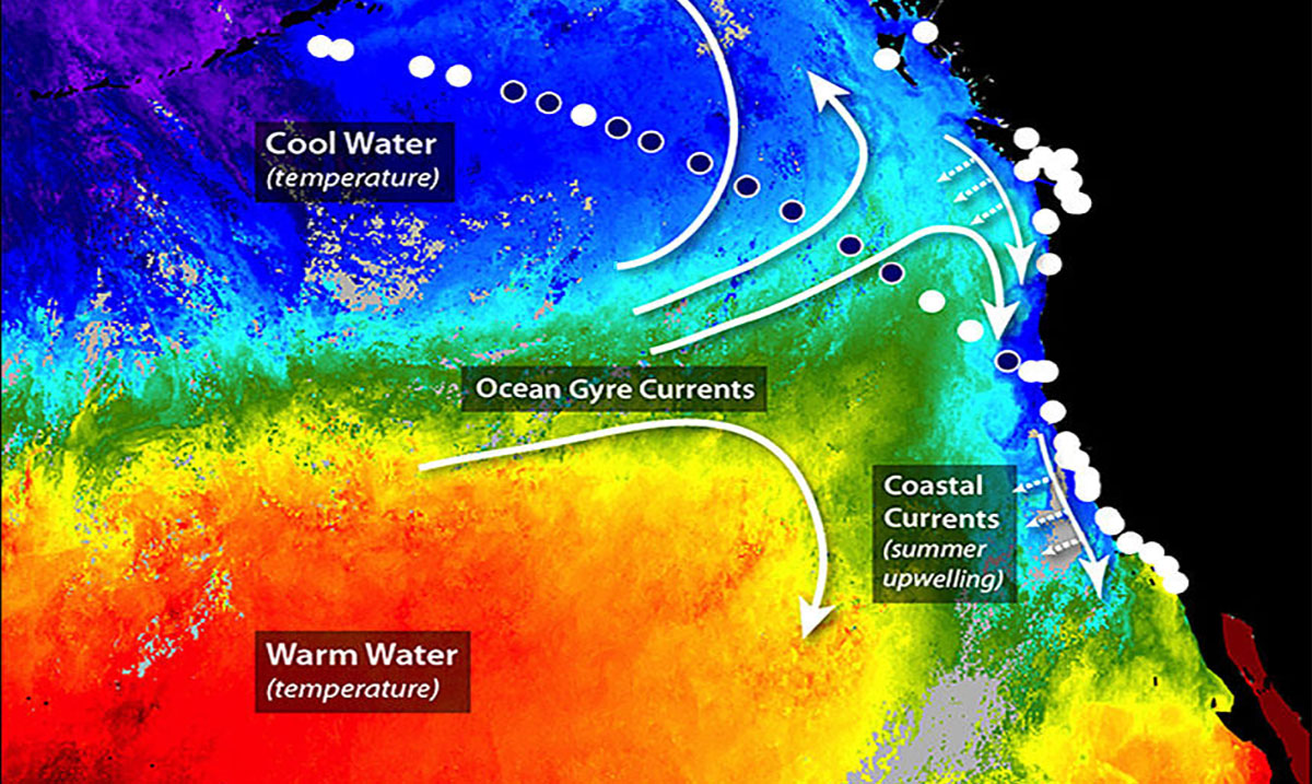 How You Are Still Being 'Poisoned' By Fukushima Radiation