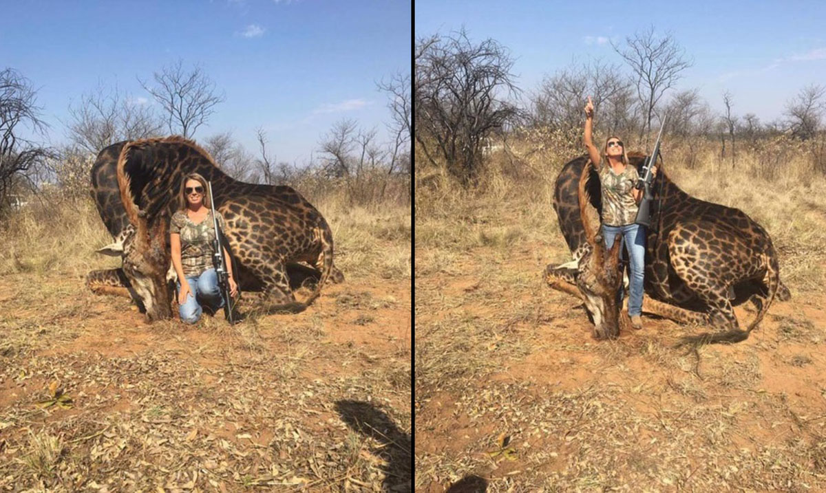 Hunter Slammed on Social Media After Being Photographed With Rare Black Giraffe She Killed For Sport