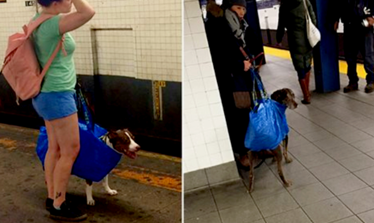 NYC Subway Bans Dogs Unless They Fit in a Bag, Forcing Dog Owners to Get Creative