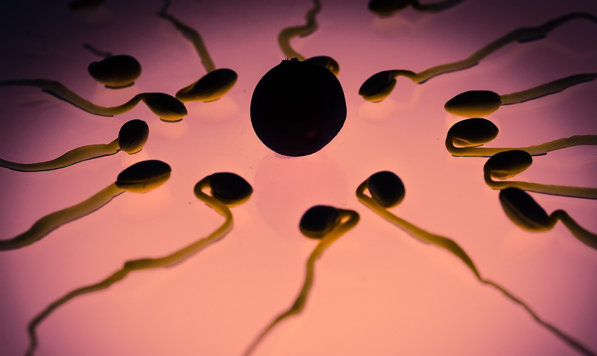 Defective Sperm Could Be Causing Recurring Miscarriages, Study Shows