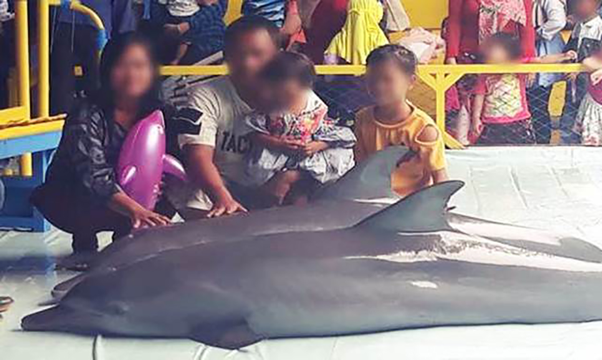 Dolphins Are Forced Out Of The Water To Pose For Selfies With Paying Customers