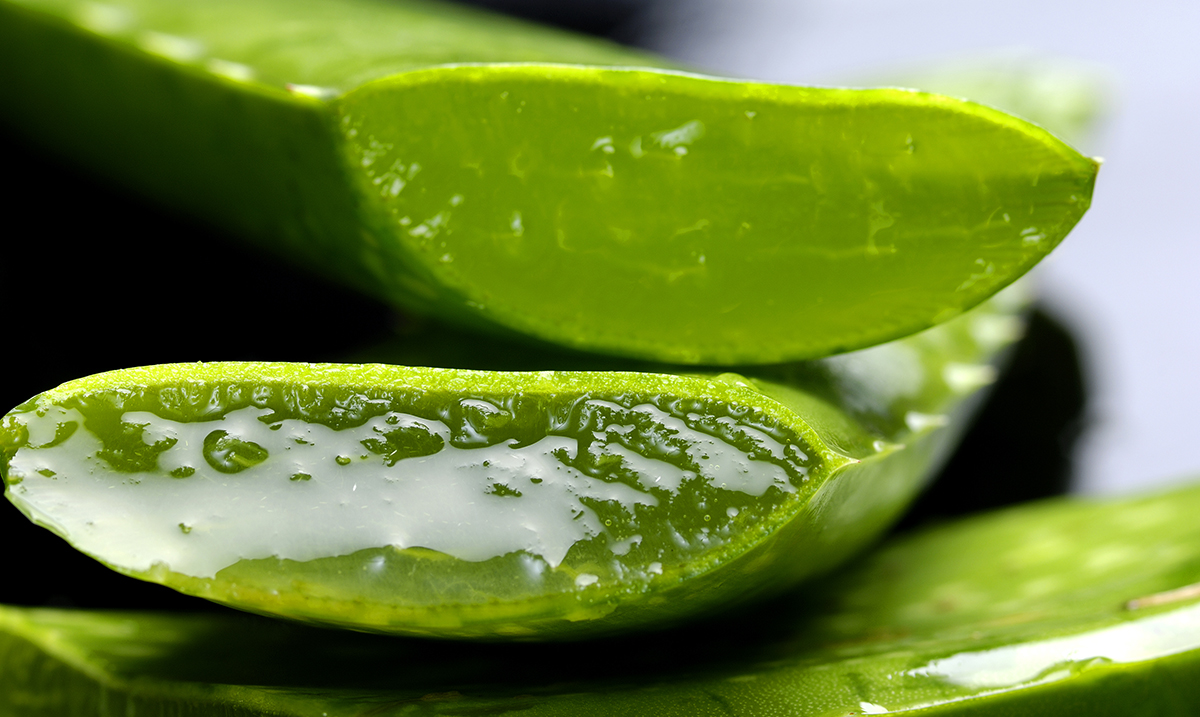 What Aloe Vera Really Does In Your Body & Why The Egyptians Called It The Plant Of Immortality