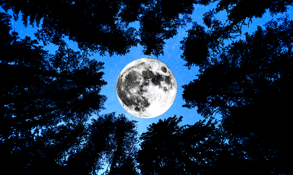 Discover The Impact The Moon's Phases Has On Your Life