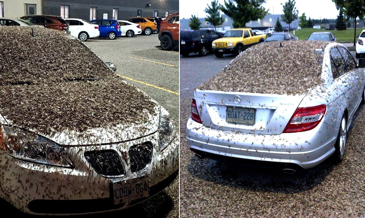 Billions Of Mayflies Swarm Midwest, Even Showing Up On Weather Maps!