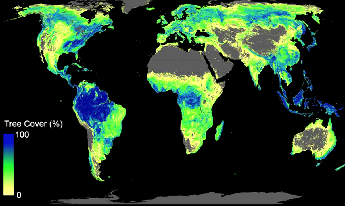 Scientists Create Interactive Tool That Shows How Many Trees Need To Be Planted and Where