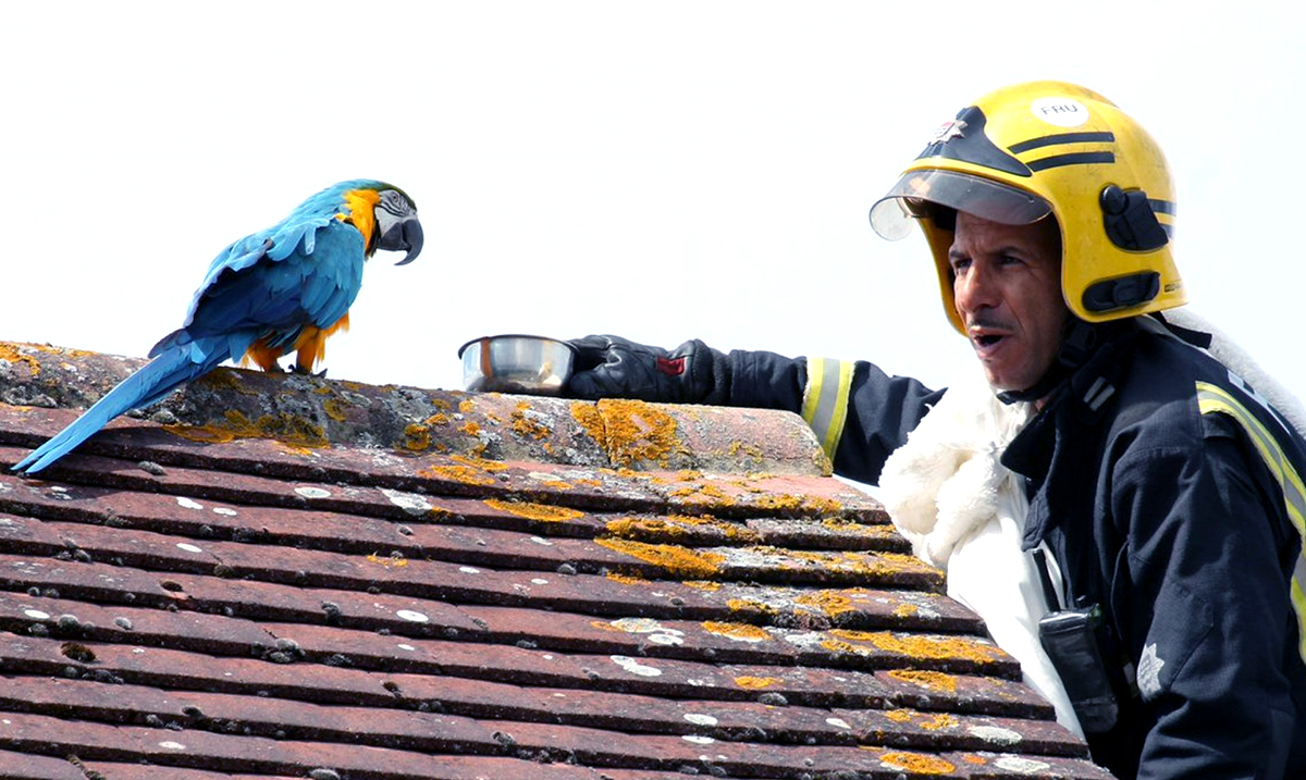 """Parrot Being Rescued From Rooftop Tells Firemen to """"F*** Off"""""""