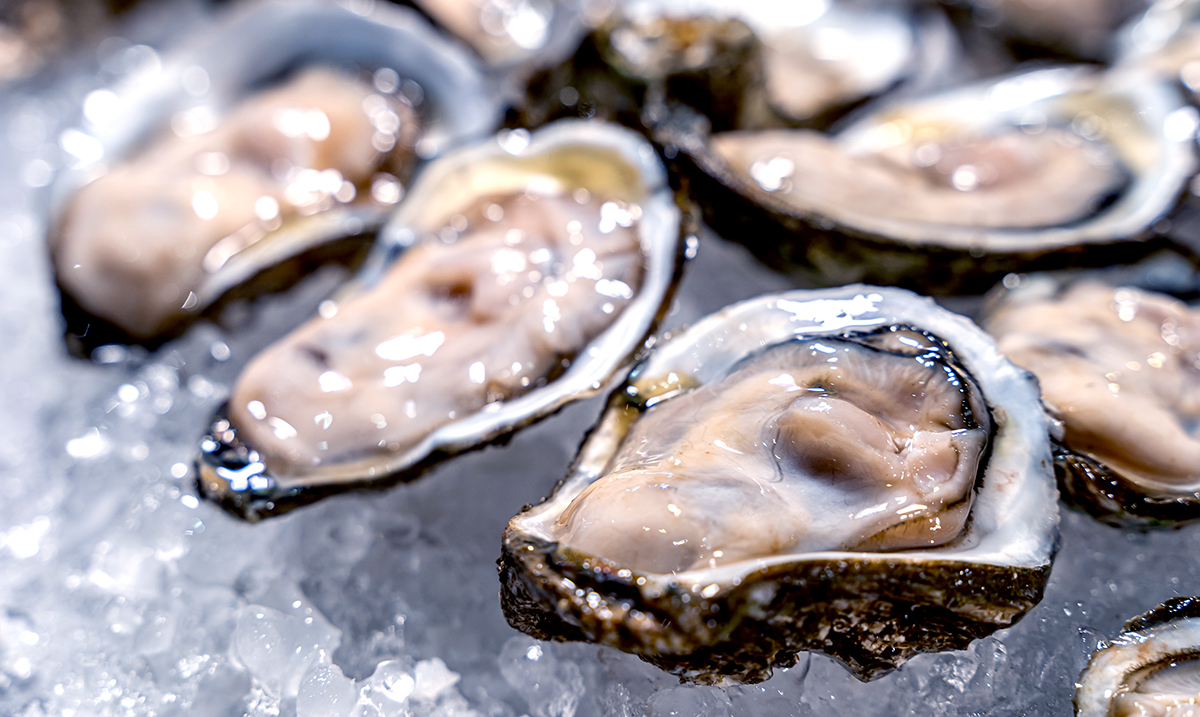 A Paralytic Shellfish Poisoning Threat Causes Pacific Oysters to Become Recalled