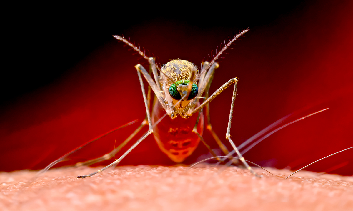 Mosquitoes Caught In Florida Carrying Deadly Brain Virus, Here's What You Need To Know