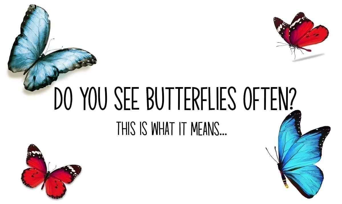 This Is What It Means If You Frequently See Butterflies