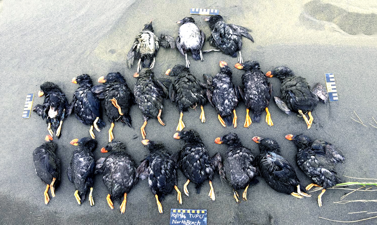 Birds Are Vanishing From North America, 3 Billion Gone – Change Is Needed!