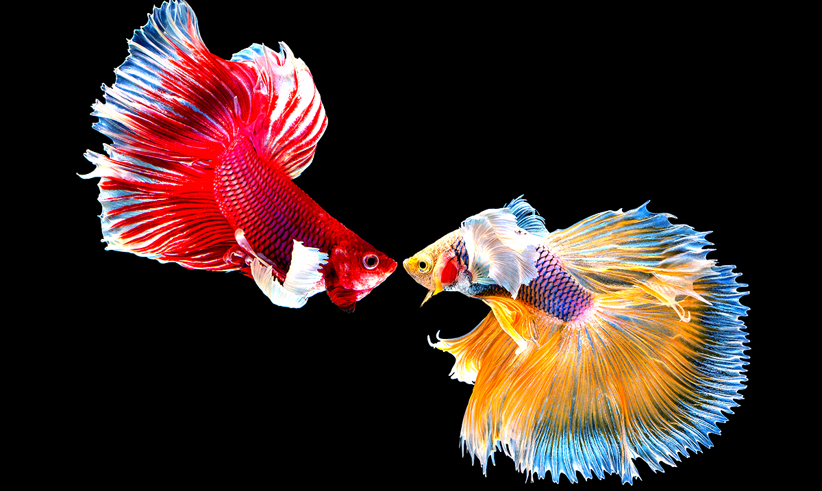 Study Suggests Fish Feel Pain Similar To How Mammals Do
