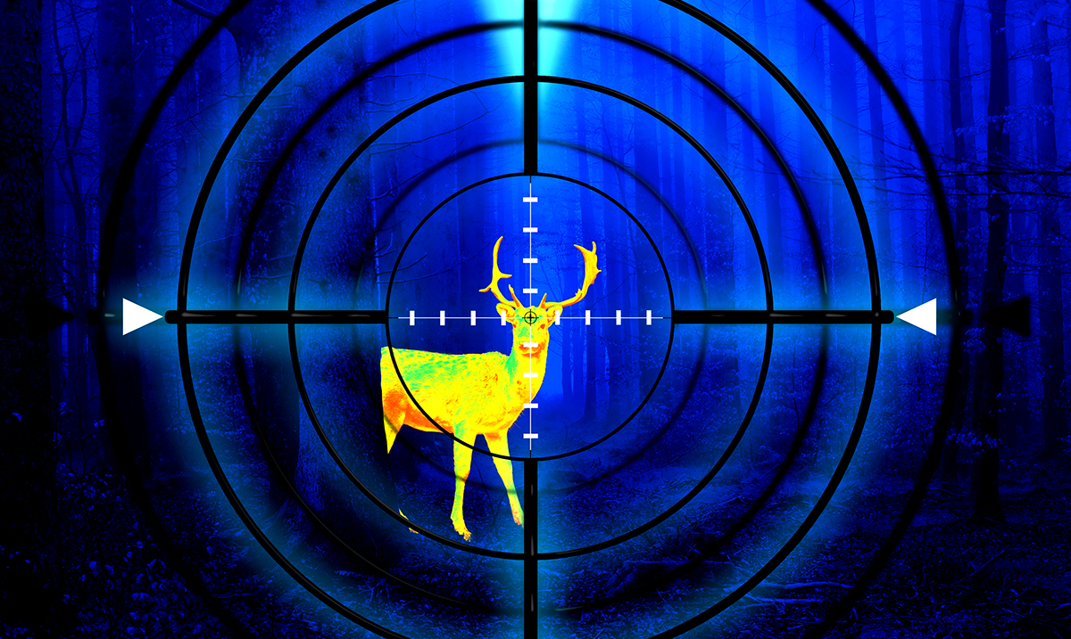 Expert Warns 'Zombie Deer Disease' Could Spread To Humans