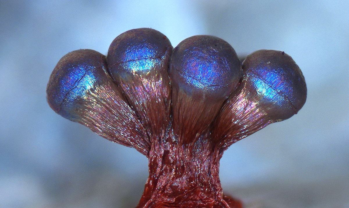 "This Insane Phenomenon Makes Fungi Produce Its Own Natural ""Glitter"""