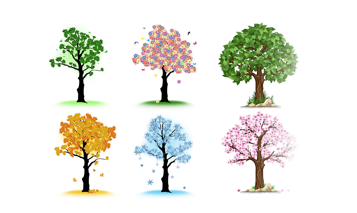 The Tree You're Most Drawn To Will Reveal Your Dominant Trait