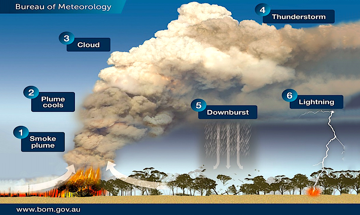 Bushfires In Australia Are Causing Pyrocumulonimbus Thunderstorms That Can Cause More Fires