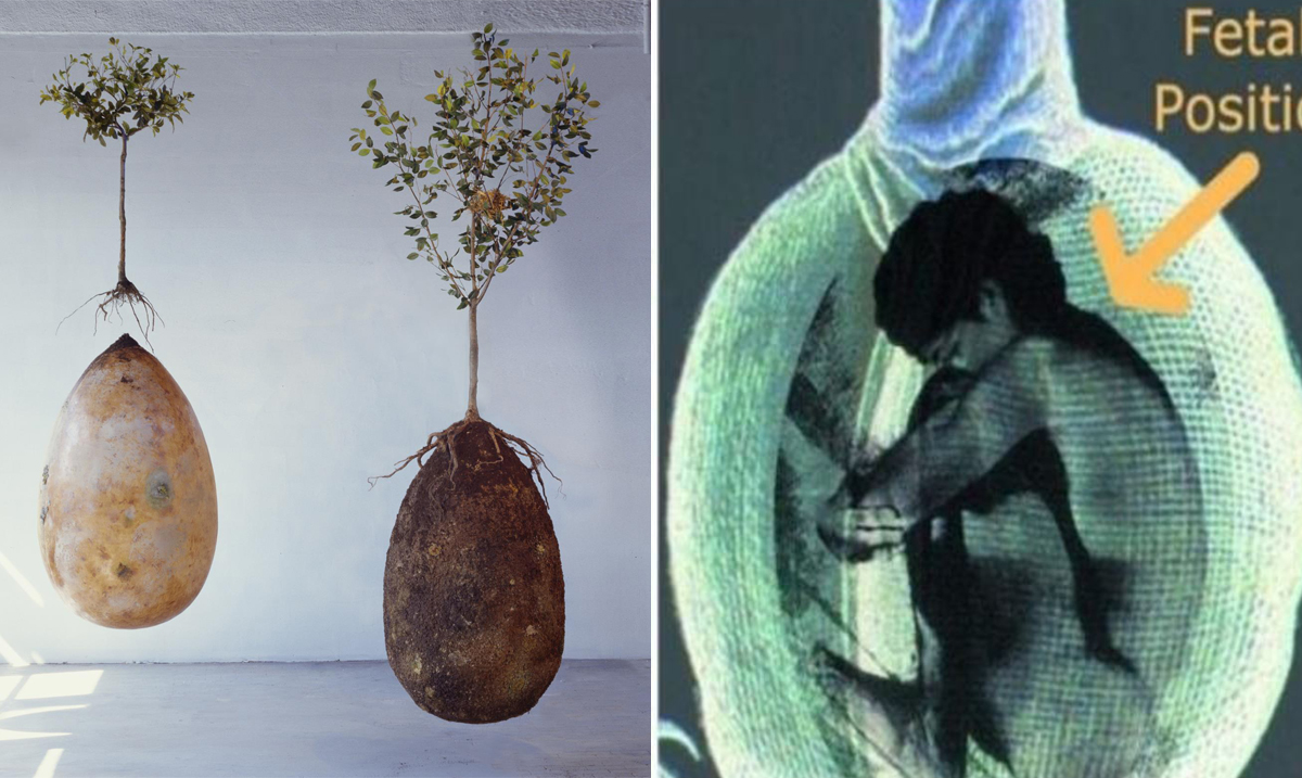 Organic Burial Pods That Turn Dead Bodies Into Trees