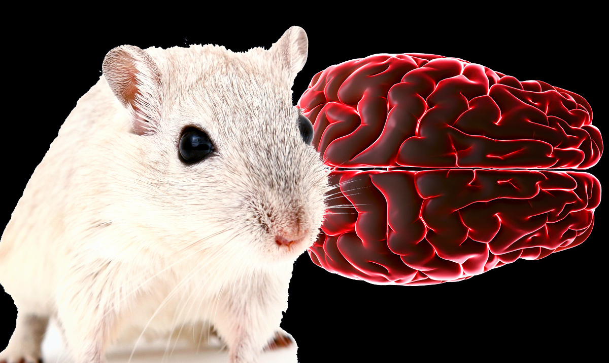 Scientists Used Light and Sound To Remove Plaque From The Brains Of Mice Showing Signs Of Alzheimer's