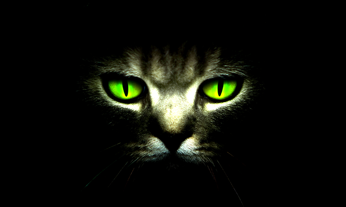 Cats Are Natural Empaths That Heal Our Mind, Body And Soul