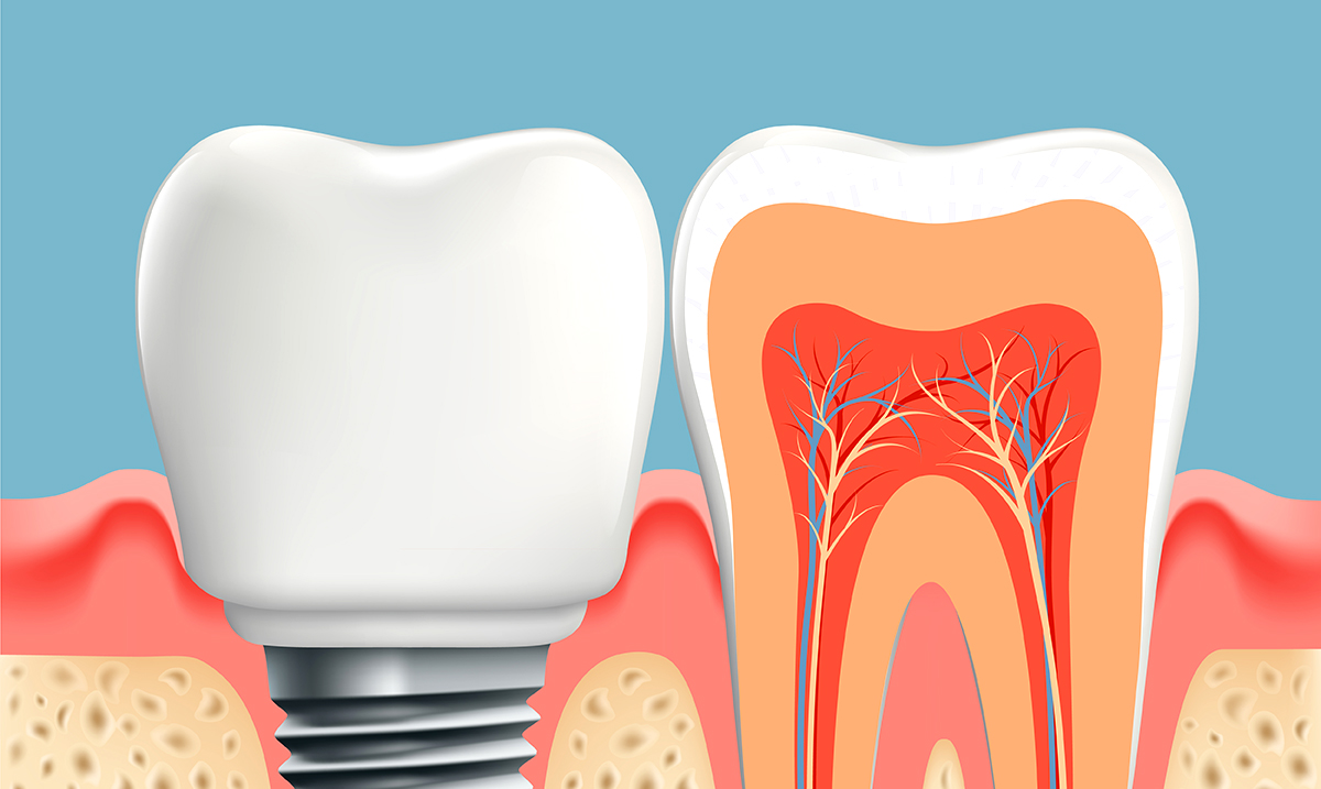 According To Research, Regrowing Teeth Might Be Possible In Only 9 Weeks